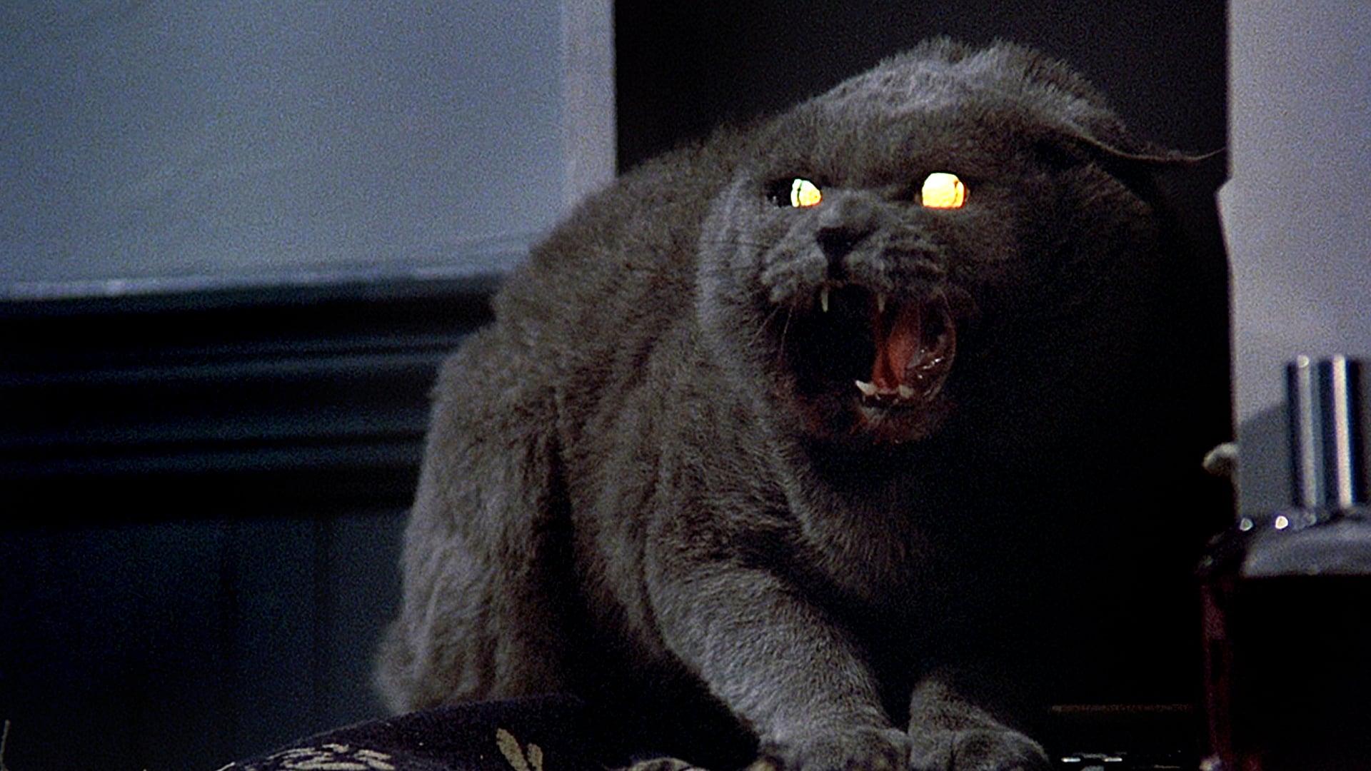 Church, the Creed family's demonic cat, in the original Pet Sematary